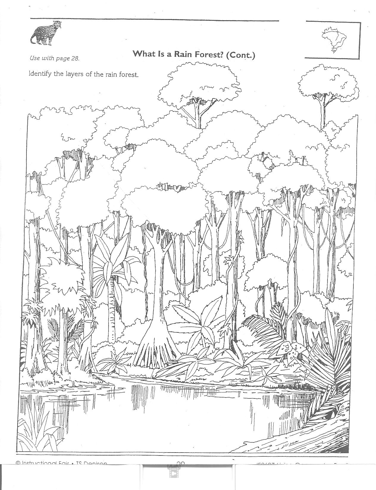 Coloring pages rainforest printable